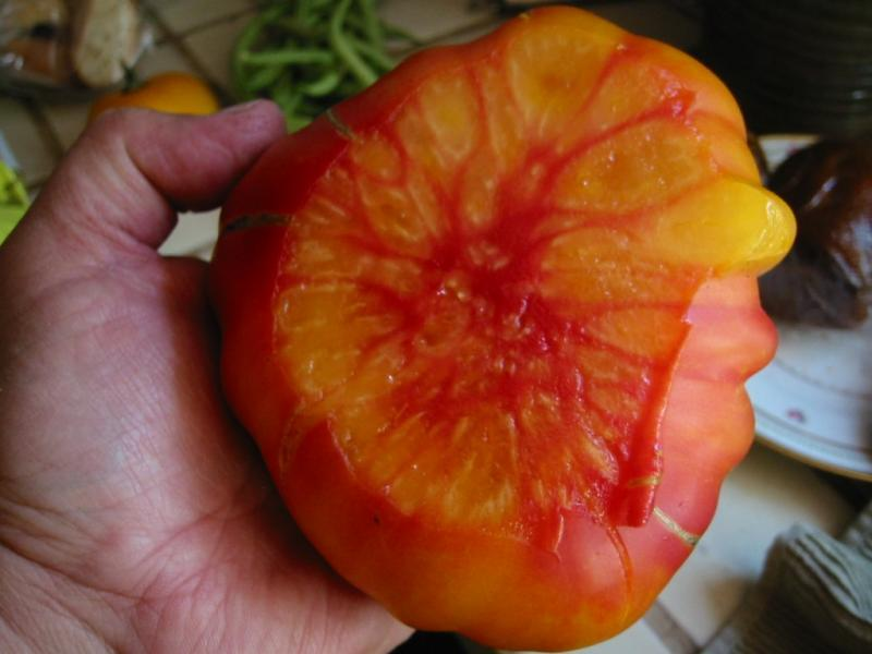 OLD GERMAN STRIPED Beefsteak tomato 20 seeds