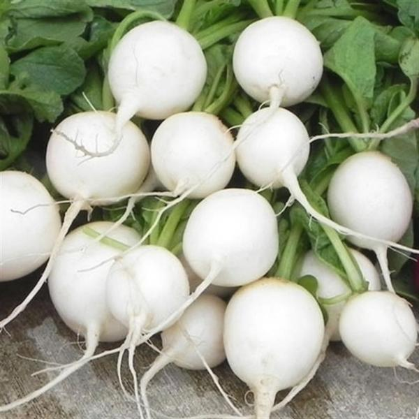 Hailstone  Radish  1 gm seeds