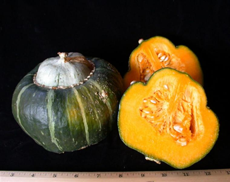 Burgess Buttercup winter squash 10 seeds