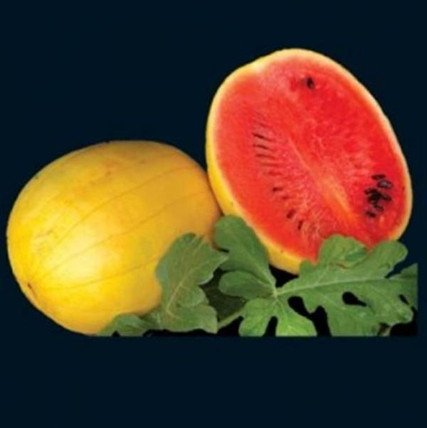 Golden Midget Watermelon 10 seeds
