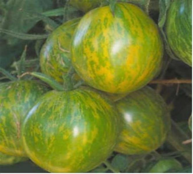 Green Zebra salad tomato 20 seeds