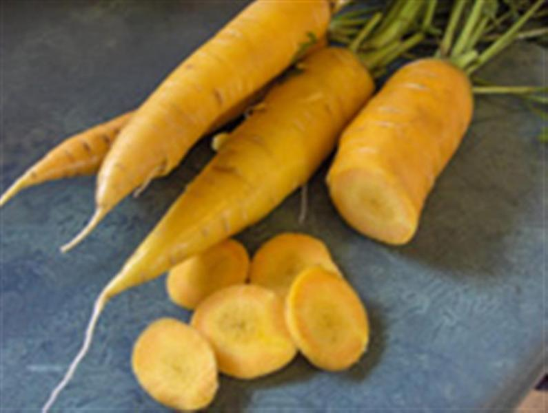 FRENCH Heirloom carrot JAUNE DU DOUBES 1gm seeds
