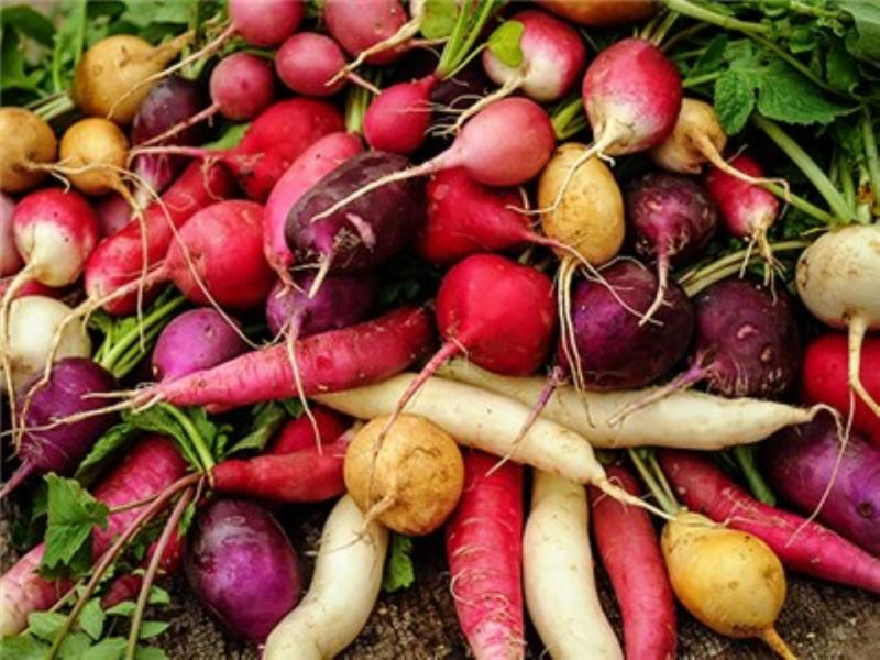 JandL mixed heirloom Radish collection 3 gms seeds