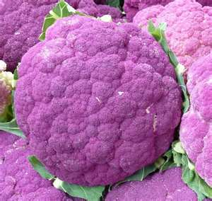 Heirloom Cauliflower SICILIAN VIOLET 100 seeds