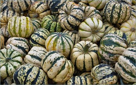 Sweet Dumpling Patty Doux squash 10 seeds