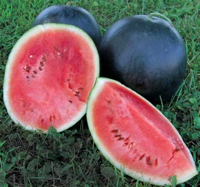 Black Tail Mountain Watermelon 10 seeds