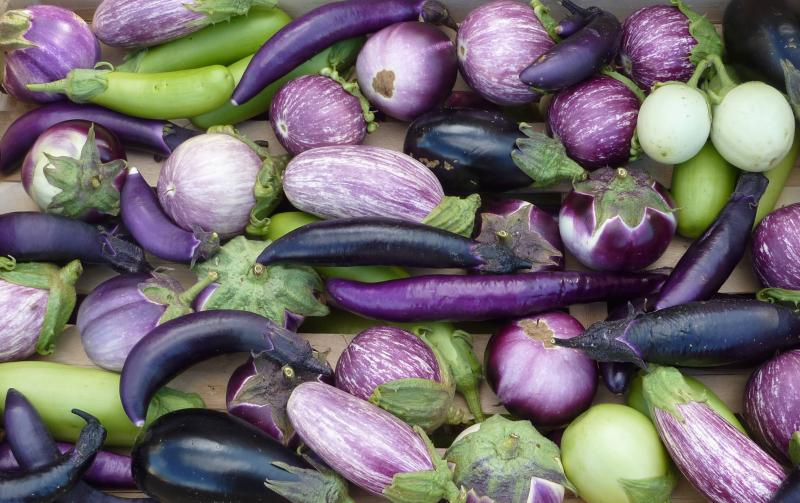 J&L heirloom Aubergine mix 100 seeds