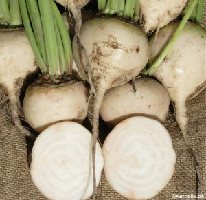 Heirloom Beetroot Albino ice  100 seeds
