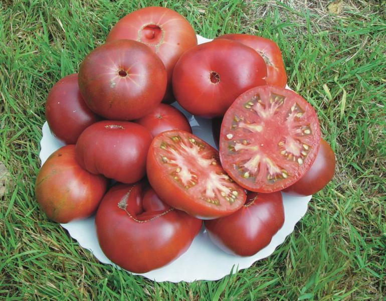 BLACK FROM TULA Russian Beefsteak tomato 20 seeds