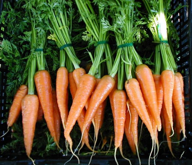 Dutch heirloom carrot AMSTERDAM FORCING 1gm seeds