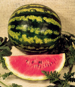 Crimson Sweet Watermelon 10 seeds