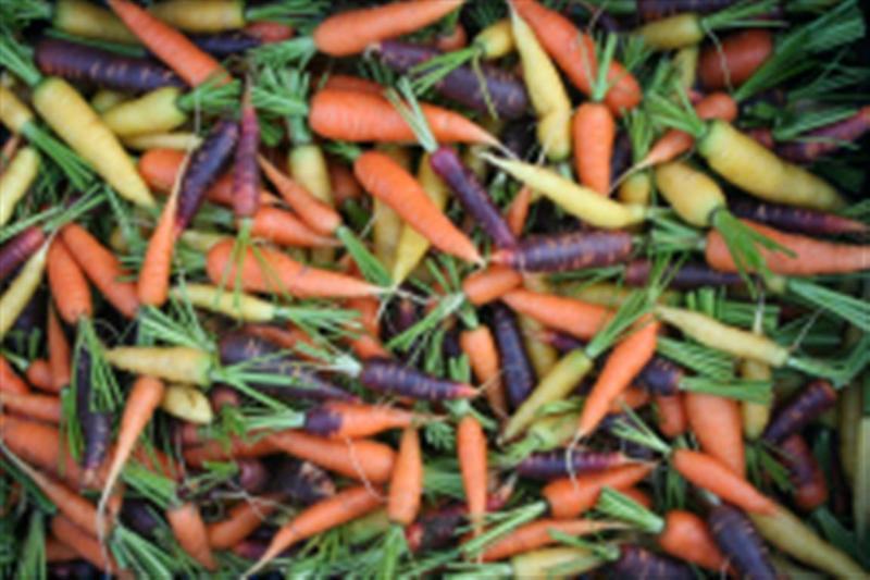 JandL heirloom heritage CARROT MIX 1gm seeds