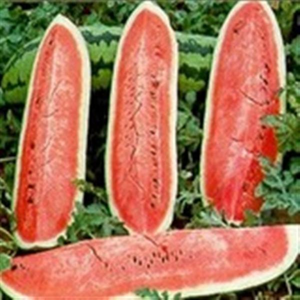 Jubilee Watermelon 10 seeds