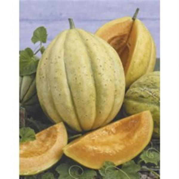 VIEILLE FRANCE FRENCH Melon  10 seeds