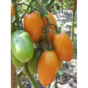 Orange Banana paste tomato 20 seeds
