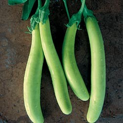 Raveena long green Aubergine 20 seeds