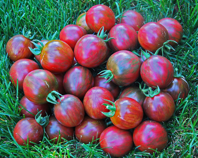 Violet Jasper striped salad tomato 20 seeds