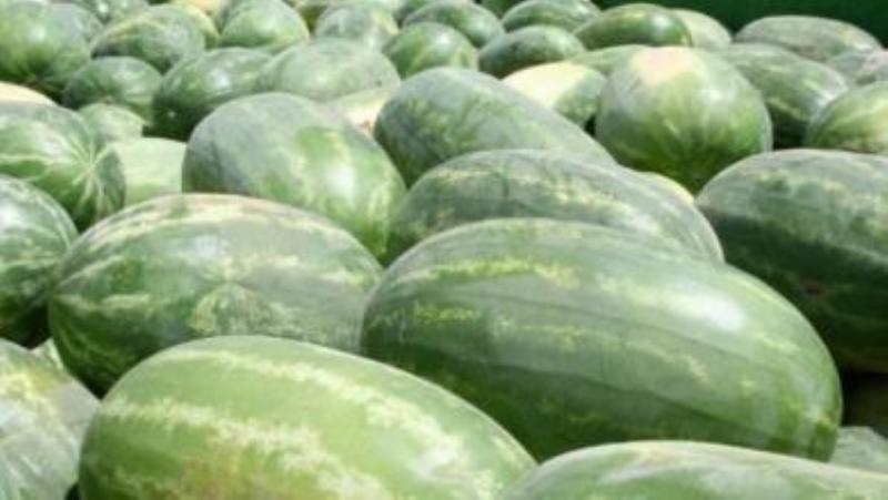 Congo Watermelon 10 seeds